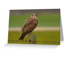 Swainson's Hawk  Greeting Card