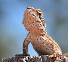 Lizard Push ups! by Mel  LEE