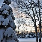Snow at Twilight by Debra Fedchin