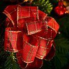 Holiday ribbon - Christmas card by Celeste Mookherjee