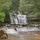 Liffey Falls, Tasmania by Tim Wootton