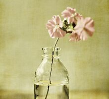 Collection by Anne Staub by Anne Staub