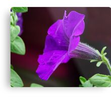 Touch of Mauve Metal Print