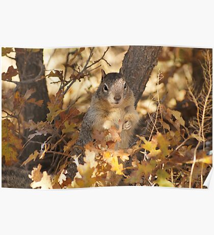 Sweet squirrell  Poster