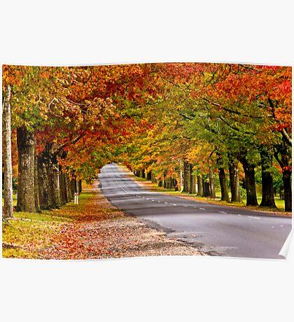 Mt Macedon Autumn Colours Poster