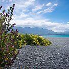 Kiwi Kolours by Paul Moore