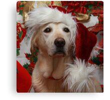 Dog wearing Christmas Hat Canvas Print