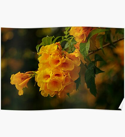 Yellow Flowers at the Bay Poster
