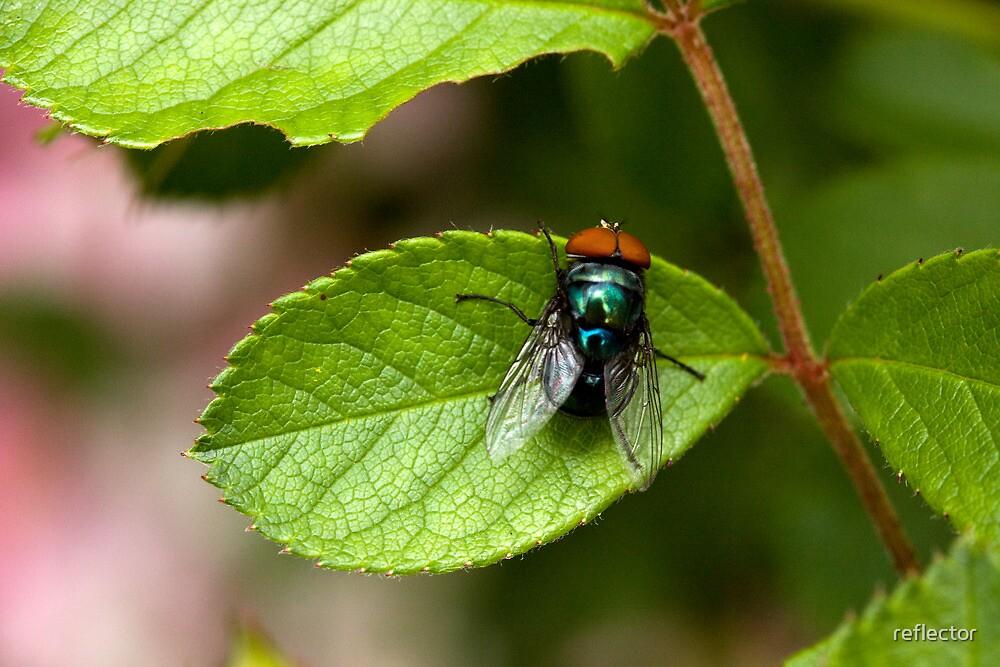 Blowfly On A Leaf by reflector