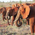 Red Elephants of Tsavo by BlackhawkRogue