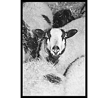 Lost in the flock Photographic Print