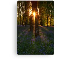 Bluebells at Sunset Canvas Print