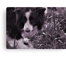 It's there !! Canvas Print