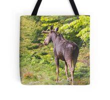 Bull Moose in Maine Tote Bag