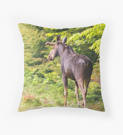 Bull Moose in Maine Throw Pillow