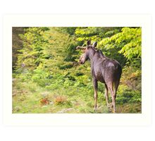 Bull Moose in Maine Art Print