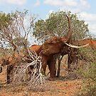 Elephants Triumph by BlackhawkRogue
