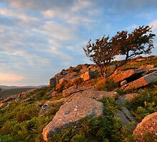 Yar Tor - Dartmoor National Park by garykingphoto