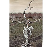 Sculpture in Orchard Photographic Print