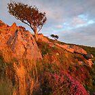Yar Tor Flora - Dartmoor National Park by garykingphoto