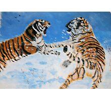 Cat Fight Photographic Print