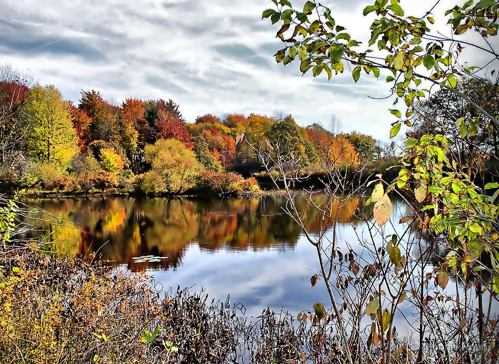 Fall at Tinker's Creek by Monnie Ryan