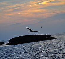 Bird Over the Ocean   by kristen948
