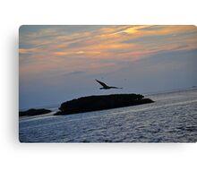Bird Over the Ocean   Canvas Print