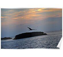 Bird Over the Ocean   Poster