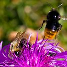 Flying bumblebee by Vasil Popov