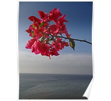 Blue ocean and red flower - Oceano azul y flor roja Poster