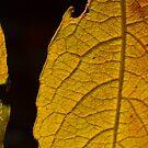 Leaf pattern 1 by Vasil Popov