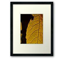 Leaf pattern 1 Framed Print