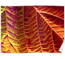 Leaf pattern 2 Poster