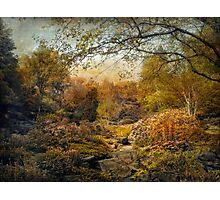 The Russet Garden Photographic Print