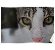 Close up kitten  Poster