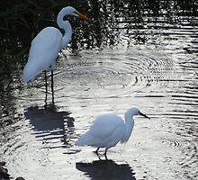 Great-Common-Egret and Snowy Egret - Garzon blanco y Garza Dedos Dorados by Bernhard Matejka