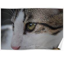 green eye kitten  Poster