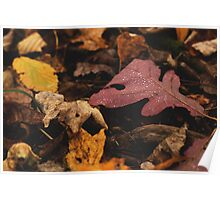Damp Leaves Poster