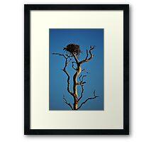 Bird Nest in Top of Tree Framed Print