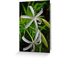 White Flower Greeting Card