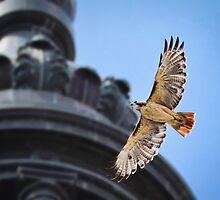 Hawk in Flight by Sarah Van Geest
