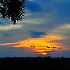 Sunset with a Palm Tree by joevoz