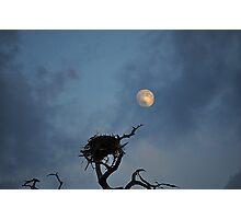 Bird Nest in the Moonlight  Photographic Print