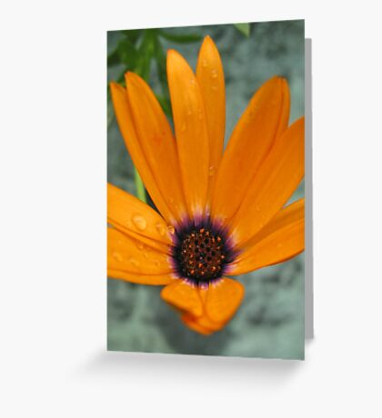Orange daisy Greeting Card
