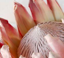 King Protea by Jeanne Horak-Druiff