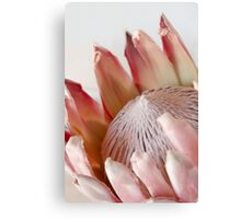 King Protea Canvas Print