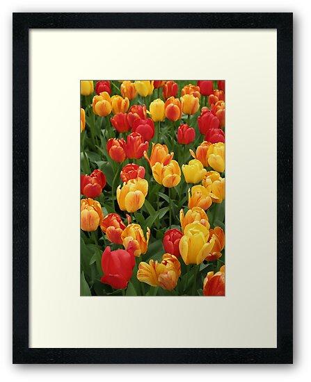 Keukenhof Tulips by Jeanne Horak-Druiff