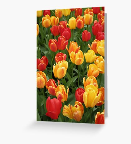 Keukenhof Tulips Greeting Card