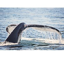 Humpback Whale Tail Photographic Print